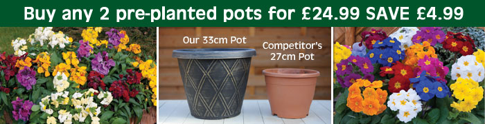 Buy any 2 pre-planted packs for only £24.99