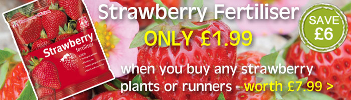 Strawberry Fertiliser Special Offer