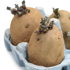 Sue Suggests - Use old egg cartons for chitting potatoes