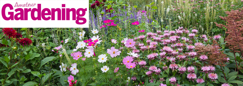 Amateur Gardening Offers