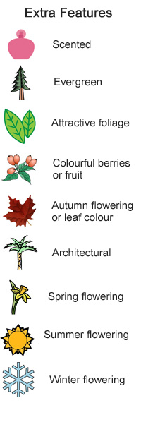 Interesting Features - Evergreen, scented, autumn leaf colour, colourful flowers, colourful berries or fruit, attractive bark, architectural