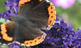 Butterfly Photo Competition