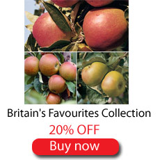 Britains Favourites Collection - SAVE 20%