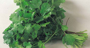 Coriander review
