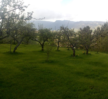 Open Orchard
