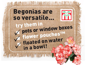Try Begonias in...