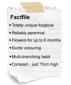 Foxglove factfile