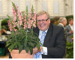 Foxglove 'Illumination Pink' - 25,000 plants sold in 1 week!