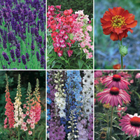 36 FREE* Perennials - worth £35.94