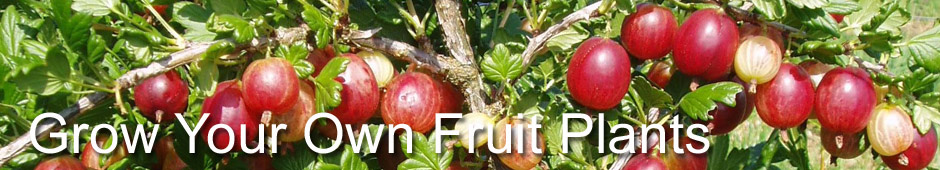 Grow Your Own Fruit Plants