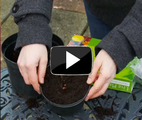 how to grow bareroot plants video