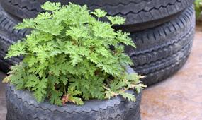 garden recycling tips