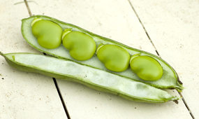 How To Grow Broad Beans