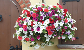How To Plant Hanging Baskets