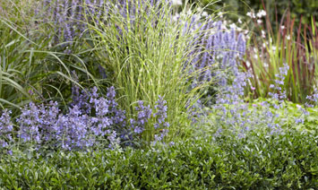 Choosing the right plants for your borders
