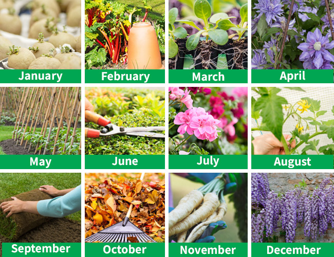 what to do in the garden this month