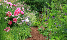 How To Plant a Hardy Perennial Border