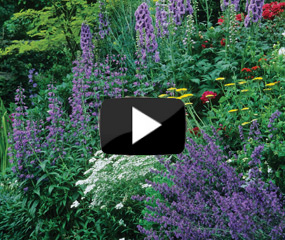 how to plant a hardy perennial border video