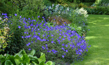 hardy perennials for shade