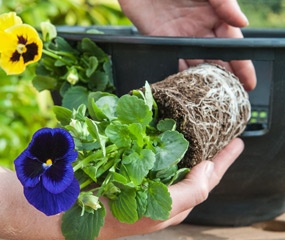 how to plant up an easy fill hanging basket for winter video