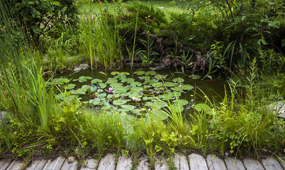 how to plant up a garden pond