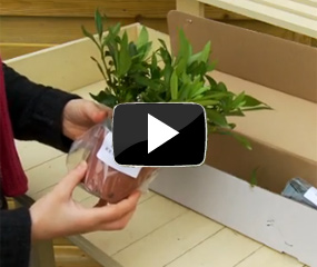 How To Grow Potted Plants