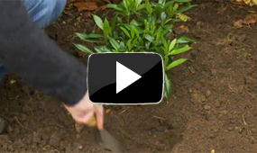 potted plants video