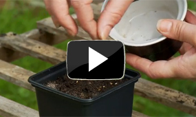 how to sow small seeds video