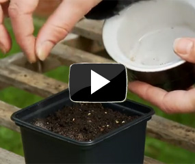 how to sow small seeds