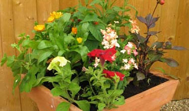summer sizzler patio container design