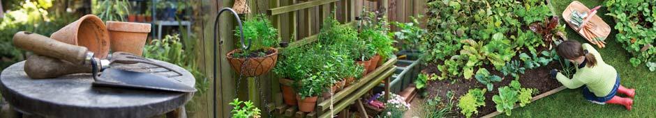 Captivating Top 10 Gardening Articles