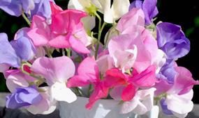 top 10 cut flowers