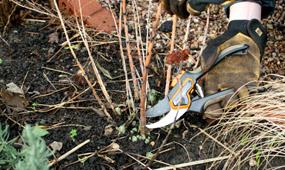 top 10 tips to prepare your garden for spring