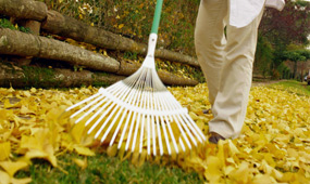 top 10 autumn tips to prepare your garden for winter
