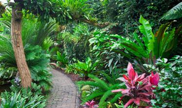 top 10 plants for a tropical garden