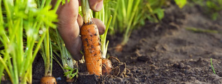 vegetable how to gardening guides