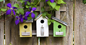 what to do in your garden to encourage wildlife