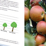 Fruit rootstock guide