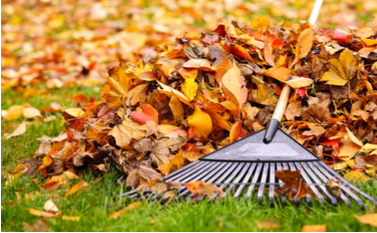 raking leaves in October