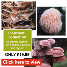 Gourmet Mushroom Collection - Only £19.99