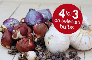 4 packs of bulbs for the price of 3 on selected bulbs