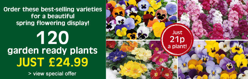 120 garden ready plants for £24.99