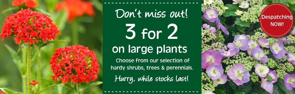 3 for 2 on large potted plants