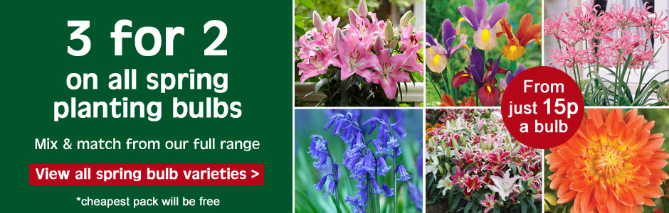 3 for 2 on all spring bulbs