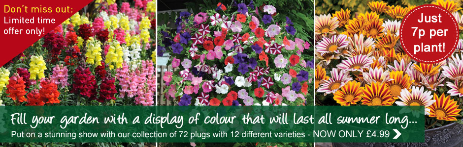 Annual Bumper Collection - 72 plug plants NOW ONLY £4.99