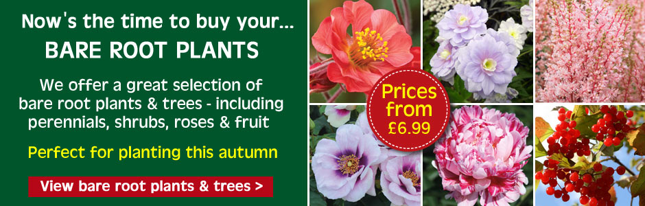 Bare Rooted Plants and Trees - choose from a wide range of fruit, hedging plants, shrubs, trees and perennials
