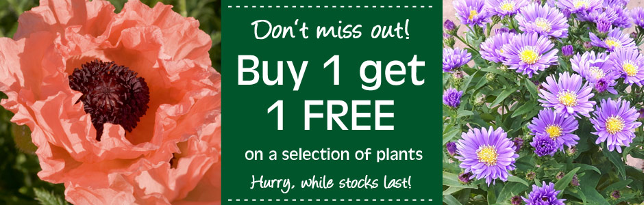 Buy 1 get 1 free on a range of plants
