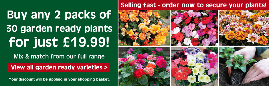 Buy 2 packs of 30 garden ready plants for just £19.99