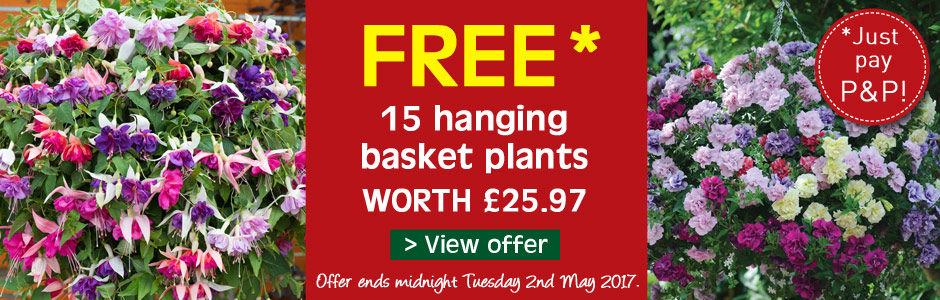 FREE* hanging basket plants - just pay P&P!