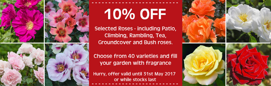 10% off selected roses